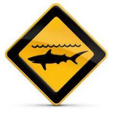 piranha surf logo - Résultats Yahoo France de la recherche d'images