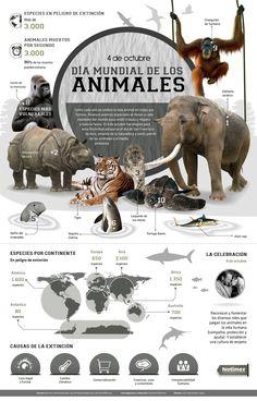 Día mundial de los animales. Pineado de http://www.eldinamo.cl/tumblr/infografia-hoy-es-el-dia-mundial-de-los-animales-conoce-a-las-especies-el-peligro-de-extincion/