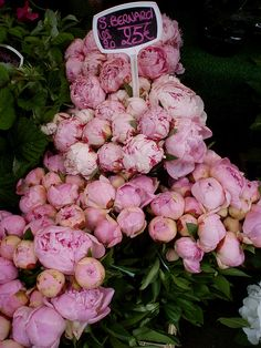 Peonies...Oh I wish I could find these in Florida!
