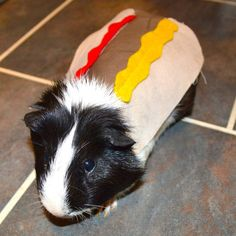 Guinea pig hotdog Pet Halloween costumes by la by laMarmotaCafe Guinea Pig Costumes, Guinea Pig Clothes, Animal Costumes, Pig Halloween, Pet Halloween Costumes, Pet Costumes, Pet Guinea Pigs, Guinea Pig Care, Hamsters