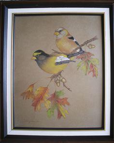 Evening Grossbeaks (original design by Sherry Nelson)...colored pencil