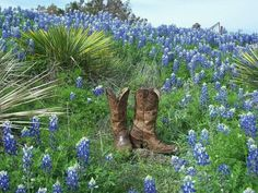 Boots & Bluebonnets....only in TEXAS!!