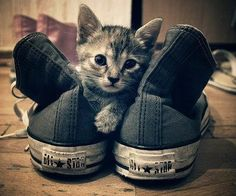 #Converse all Star #kitten