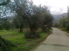 Παλαιολόγιο (Μυστράς) Country Roads