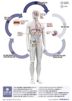 infographics 과도한 나트륨 섭취가 건강에 미치는 해악