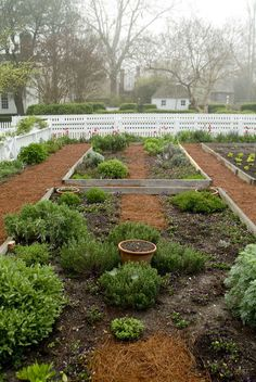 Herb garden in Colonial Williamsburg
