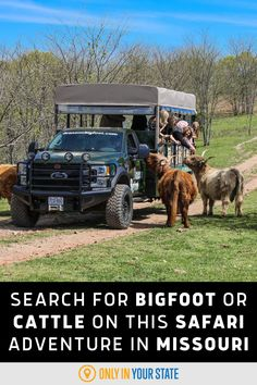 If you're looking for a unique adventure, take this thrilling safari ride in Missouri that will take you on a journey to find bigfoot. There's a script and plenty of action! Your family will also love the park's Scottish Highland Farm tour with beautiful cattle. Best Bucket List, Finding Bigfoot, Safari Adventure, Hidden Beach, Swimming Holes, Scottish Highlands, Natural Wonders, Cattle, Trip Planning