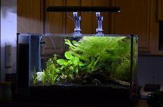 Fluval Spec V Aquascape   Ecosia
