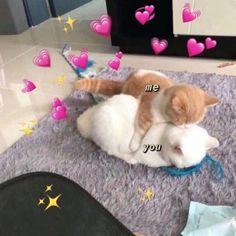 Cute Cat Memes, Cute Love Memes, Funny Cute, Funny Memes, Memes Humor, Cute Cats And Kittens, Baby Cats, Kittens Cutest, Memes Lindos