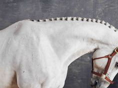 www.pegasebuzz.com | Equestrian photography : Juan Lamarca - Horse series.
