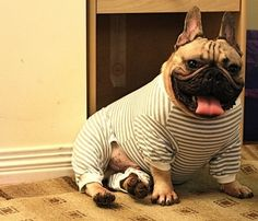 Night! | 17 Animals All Ready For Bed