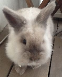 My old rabbit❤️ it's ded snøkrystall it's your name❤️