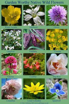 12 Wildflowers You Can Grow