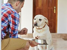 By Juliana Weiss-Roessler While it has become common to watch out for the signs of life-threatening food allergies in young children, it still comes as a surprise to some dog parents that their four-legged companions can also suffer from food allergies.