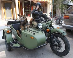 dog in motorcycle sidecar - Google Search