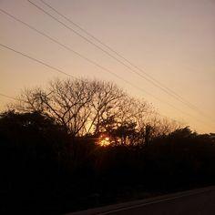 Filtración del sol entre los árboles! :D