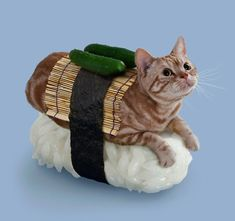Photographs Of Cats Dressed Up Like Sushi For Some Reason | Happy Place