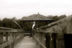 Pawleys Island, SC ~ the marsh ~ We love to drive there and shell hunt when we visit. We have found some weird stuff there.