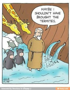 Noah might have been rethinking bringing all of the animals.