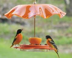 How to attract orioles to your garden!