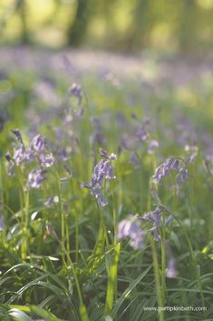 Wonderful Places To See Bluebells in Surrey, Hampshire and Sussex - Pumpkin Beth Beautiful Places To Visit, Wonderful Places, Places To See, Pretty Flowers, Blue Flowers, Wild Flowers, Bog Garden, Garden Plants, Kew Gardens