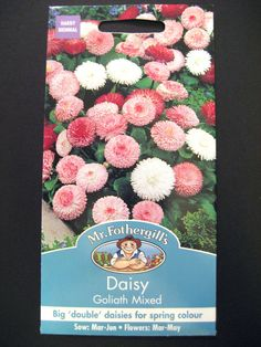 "MR. FOTHERGILL'S DAISY "" GOLIATH MIXED "" SEEDS Listing in the Annuals & Biennials,Plants, Trees & Seeds,Garden, Yard & Plants,Home & Garden Category on eBid United Kingdom"