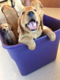 Here, have a tub of puppies.