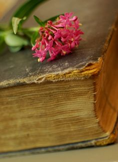 Spent bloom, worn pages, memories of someone I loved the closeness shared thoughts time given energy felt even now when I enter that room within my mind the memory is crisp fresh like clear words on a page. My Mind, Crisp, Bloom, Felt, Memories, Thoughts, My Love, Photography, Memoirs