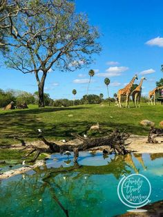 Complete Guide to the Orlando Theme Parks - | Family Travel Magazine Tampa Orlando, Orlando Theme Parks, Orlando Resorts, Family Cruise, Family Travel, Busch Gardens Tampa Bay, Walt Disney World Vacations, Clearwater Beach, Travel Magazines