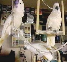 All About Cockatoos - Hand Made Toys