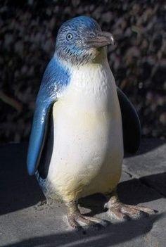 Little Blue (Fairy) Penguin