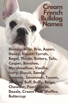 When you are anxiously waiting for your French Bulldog and thinking about names...Blondie, Nilla, Brie, Aspen, Honey, Blanca, Ferrah, Bagel, Thistle, Butters, Tofu, Casper, Banshee, Marshmallow, Vanilla, Ivory, Biscuit, Sandy, Summer, Savannah, Tuscan, Sesame, Buffy, Beige, Chowder, Pearl, Sprite, Dazzle, Cream Puff, Waffles, Buttercup#FrenchBulldog #FrenchBulldogs #FrenchBulldogpuppy #FrenchBulldogpuppies #TheFrenchBulldog #cuteFrenchBulldogs #FrenchBulldogVideos #Frenchies #CreamFrenchBulldogs Cream French Bulldog, French Bulldog Names, French Bulldog Puppies, French Bulldogs, Savannah Chat, French Bulldog Pups