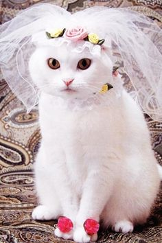 Bride #cat                                                    #lolcats #catsfunny #funnycats
