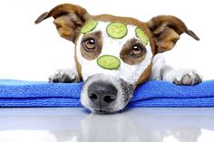18 best pet corral images on pinterest layton utah pet grooming 5 dog grooming tips solutioingenieria Gallery