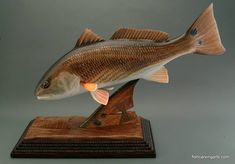 50 Best Redfish Images Sea Angling Goldfish Red Fish