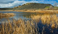 Malheur Nat'l WR was one of the first refuges established in the USA; it remains one of the best places to bird watch in OR