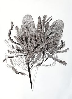 Glorious Banksia (Banksia menziesii) by Jeanette Giroud Plant Sketches, Surf Tattoo, Native Tattoos, Resin Wall Art, Watercolor Projects, Fine Line Tattoos, Plant Art, Sketch Painting, Buy Art Online