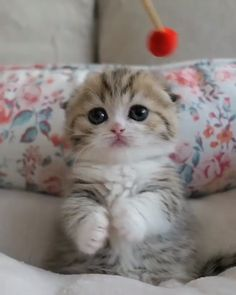 Funny Cats and Kittens Jump Meowing Cute Funny Animals, Cute Baby Animals, Funny Cats, Cute Kittens, Kittens Playing, Kittens Cutest Baby, Cute Baby Cats, Beautiful Cats, Animals Beautiful