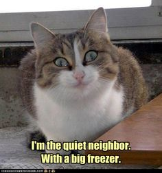 quiet neighbor....hummmm....I can picture a few people....lol