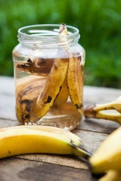 Slupky od hodně zralých banánů namočte asi na dva dny do vody, a tu pak použijte jako zálivku pro rostliny – toto hnojivo prospívá hlavně růžím; archiv redakce