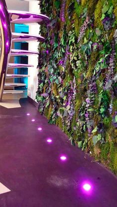 Muro vegetal/Vegetal wall XII