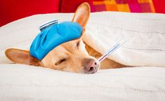 6 Ways Your Pet Tells You They're In Pain