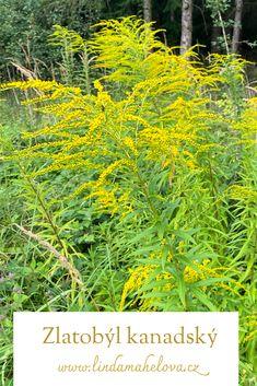 Herbs, Plants, Herb, Plant, Planets, Medicinal Plants