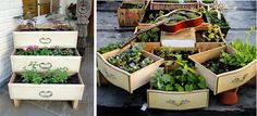 malá zahrádka - nevyhazujte nábytek-využíjte ho Succulents, Plants, Succulent Plants, Plant, Planets