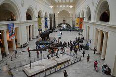 Première visite à Chicago avec son célèbre musée d'Histoire naturelle, le Field museum qui se situe dans le South Loop dans le Museum Campus.