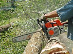jakie drzewa można wyciąć bez zezwolenia