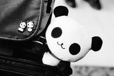 pandas pandas pandas ♥