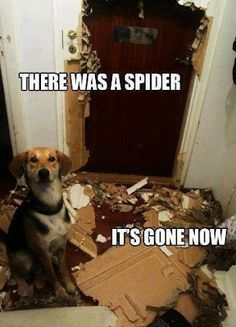 There was a spider.  It's gone now.