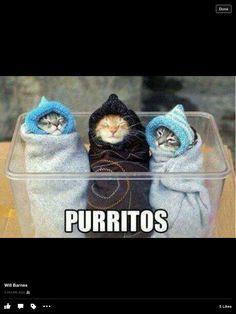 Precious! Love this! Haha!