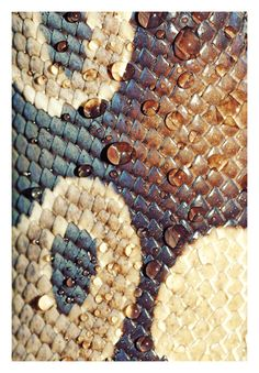 texture, color and dew... Snake skin